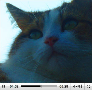 Cat in video
